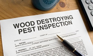 Insect & Pest Inspections